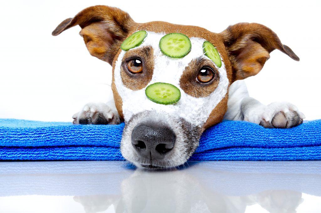 Perro con cosméticos